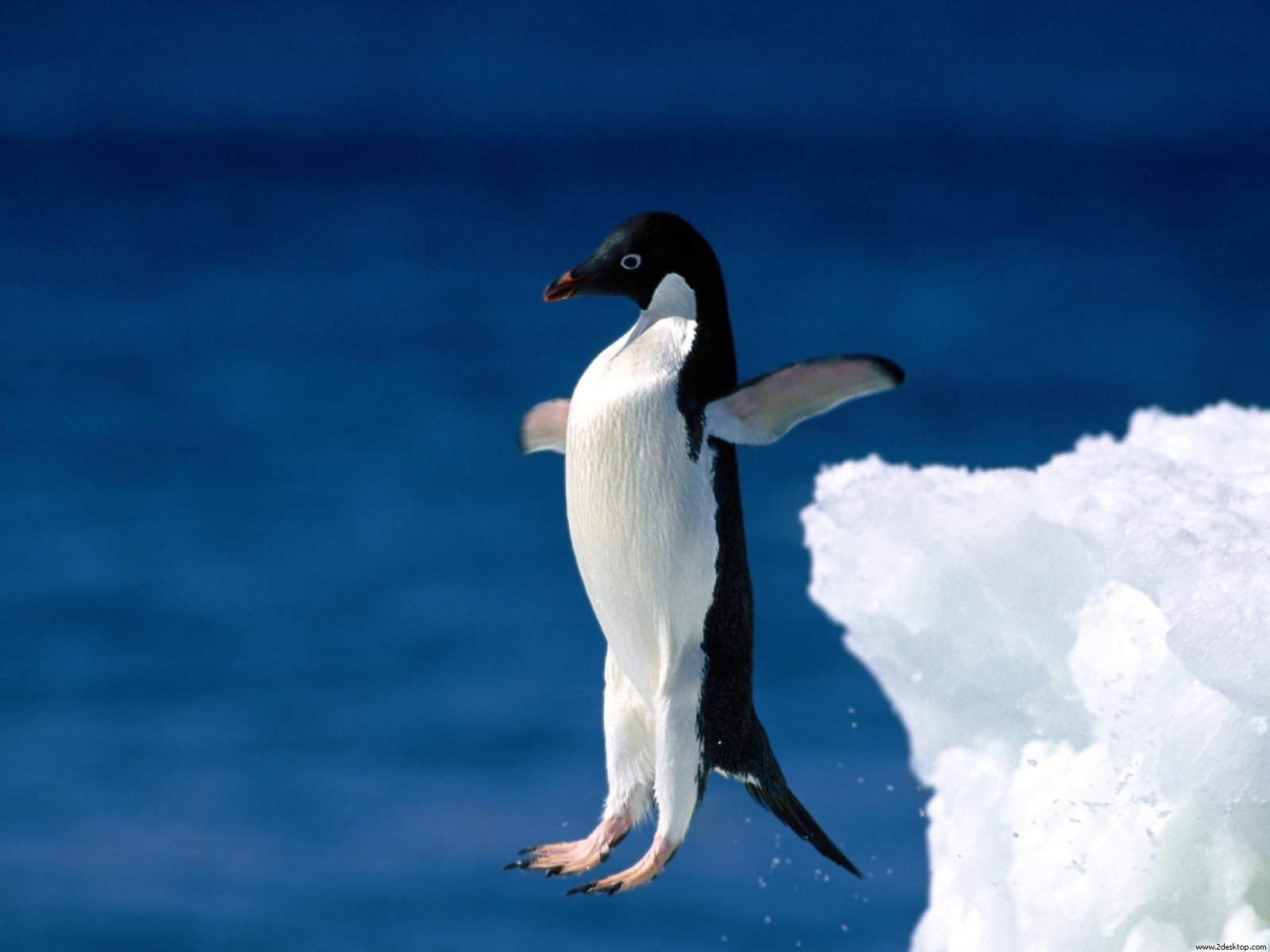 leap_of_faith_penguin-normal